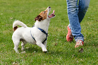 Adult Dog Training Preston
